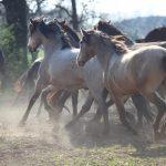 Schnelle Pferde