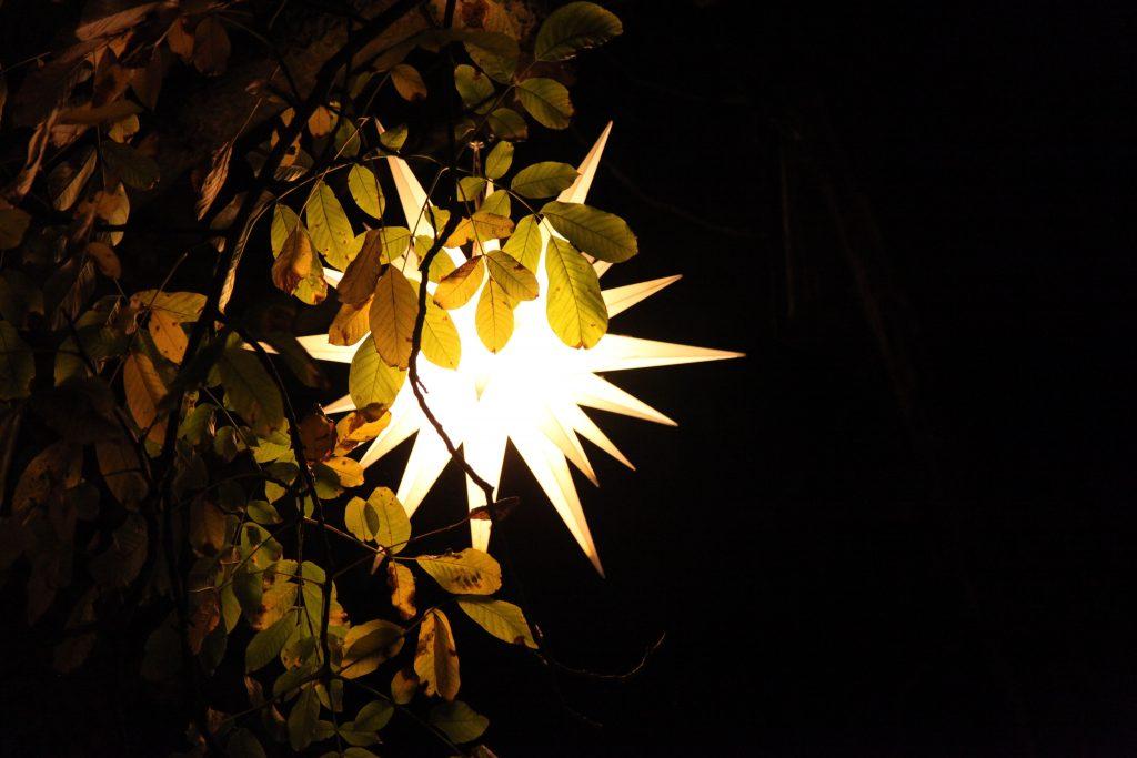 Stern im Baum