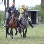 Schöne Gänge der Pferde