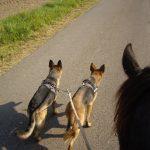 unterwegs mir Pferd und Hunden