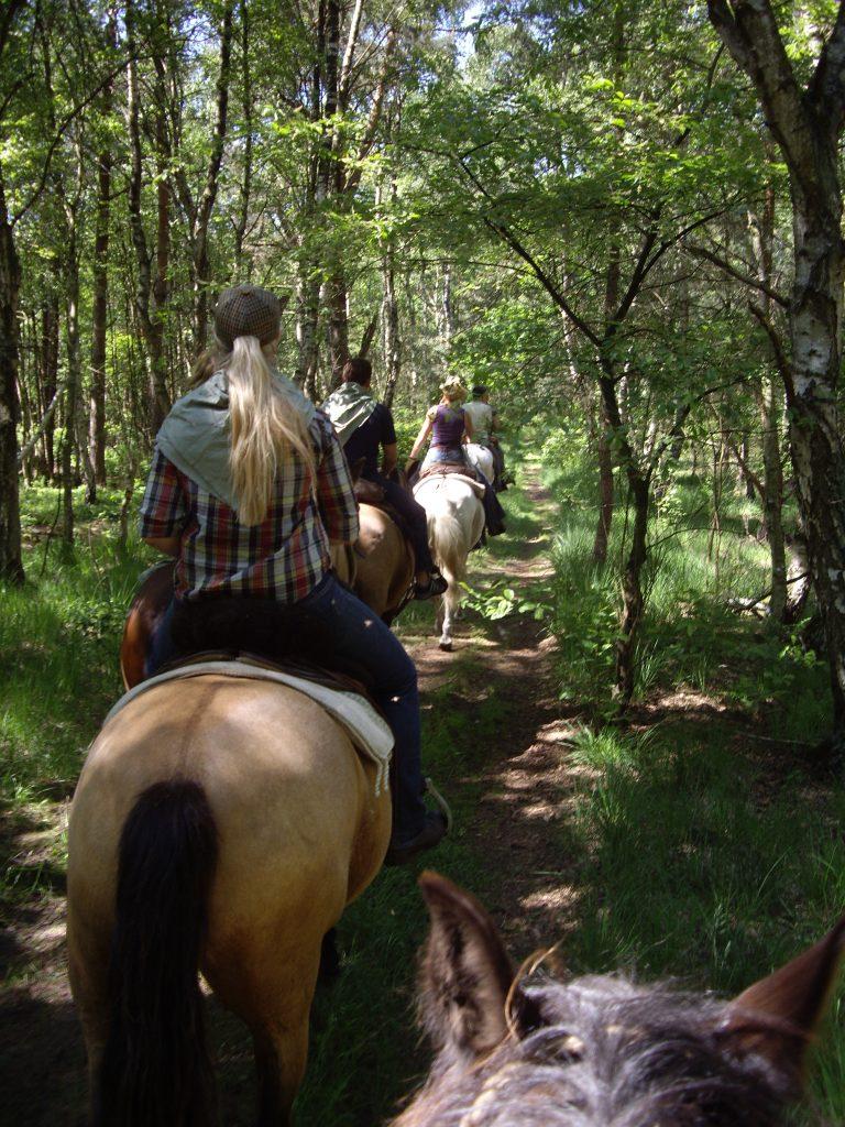 Unterwegs mit den Pferden