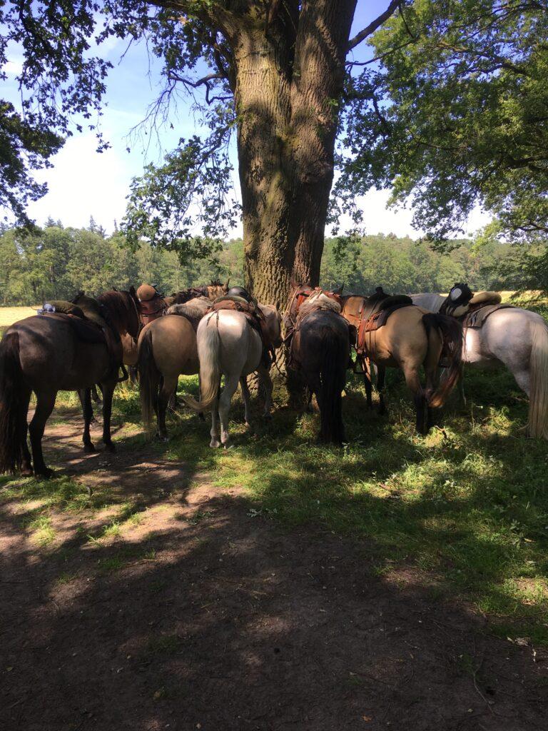 Die Pferde warten an einem wunderschönen Baum in der Natur