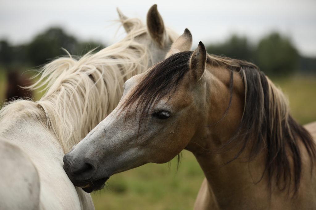 Pferdemutter und Sohn