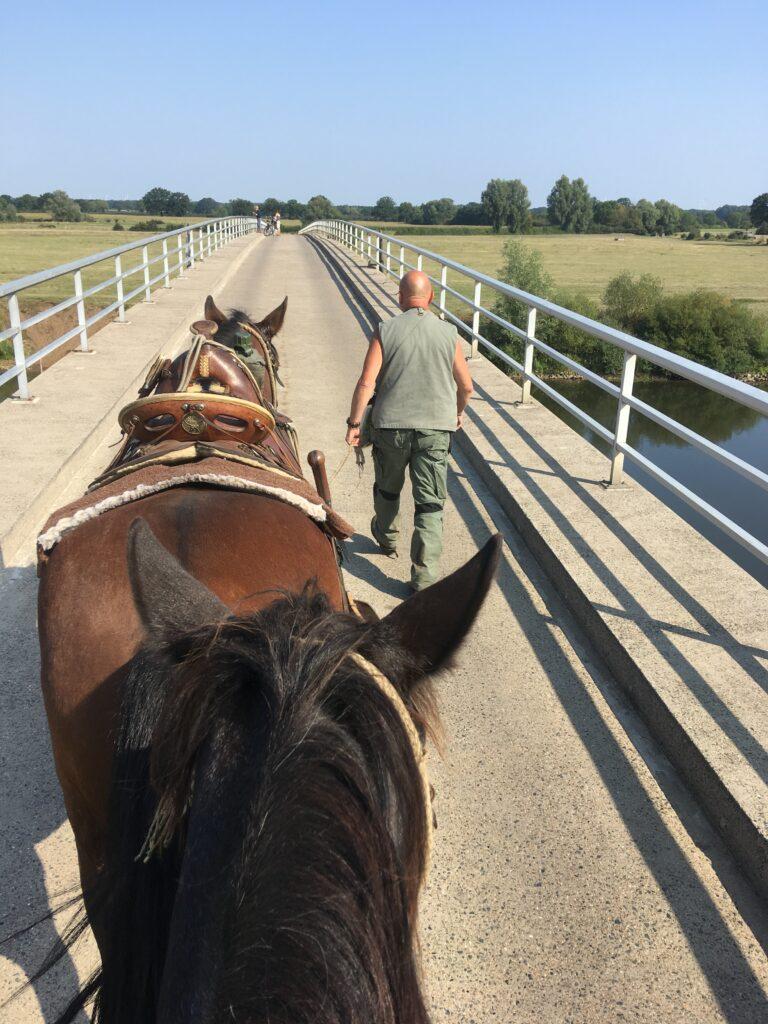 Zu Pferd über die Aller