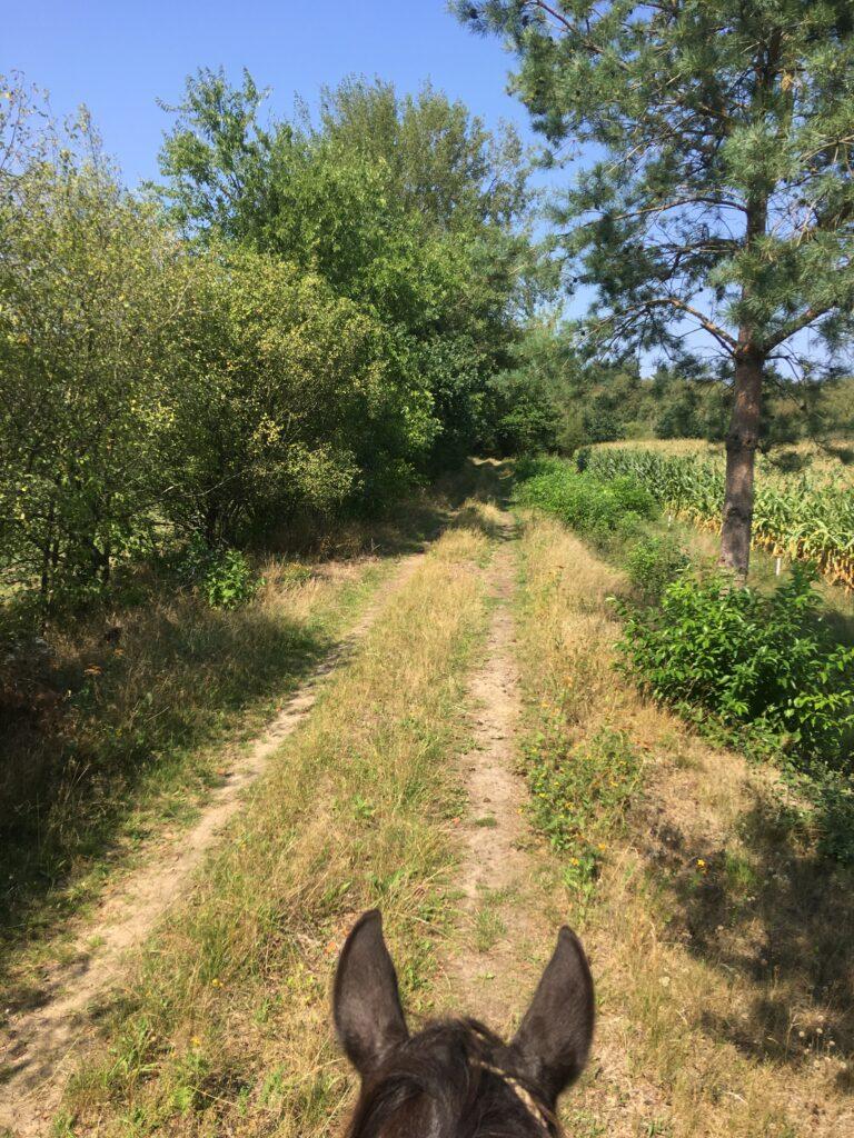 Zu Pferd unterwegs in Niedersachsen